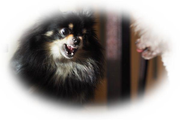 犬が喧嘩している夢や噛みあっている夢