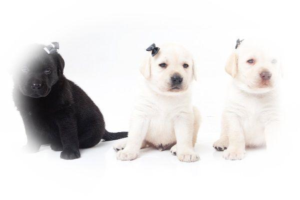 白い犬と黒い犬の夢
