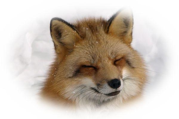 笑みを浮かべる狐を見る夢