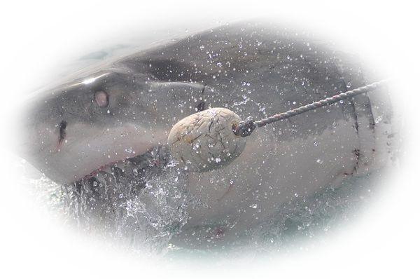 サメに噛まれる夢