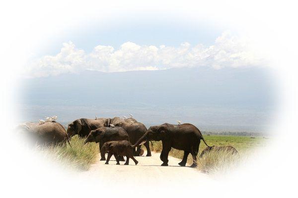 象の親子を見る夢(象の家族を見る夢、象の群れを見る夢)