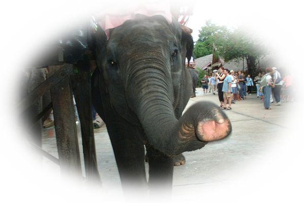 象の鼻を見る夢