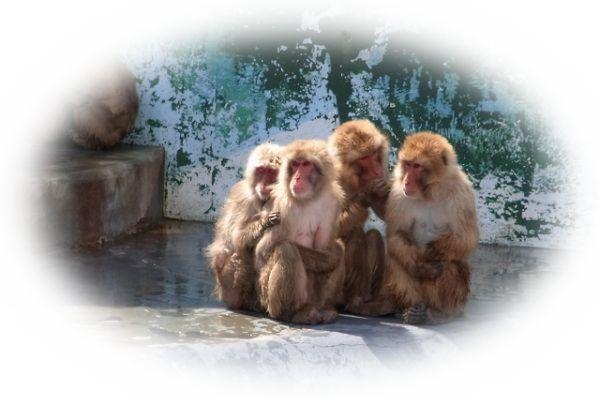 毛づくろいしている猿を見る夢