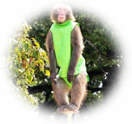 猿が芸をしている夢(猿の曲芸を見る夢)