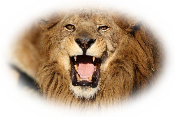 ライオンに襲われる夢(ライオンに追いかけられる夢)