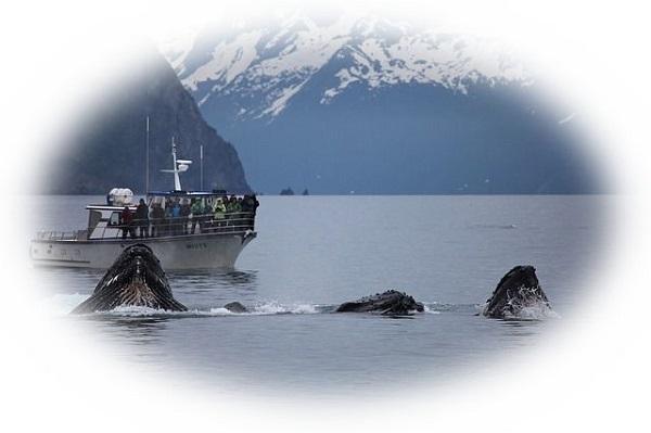 クジラを助ける夢(クジラに助けられる夢)