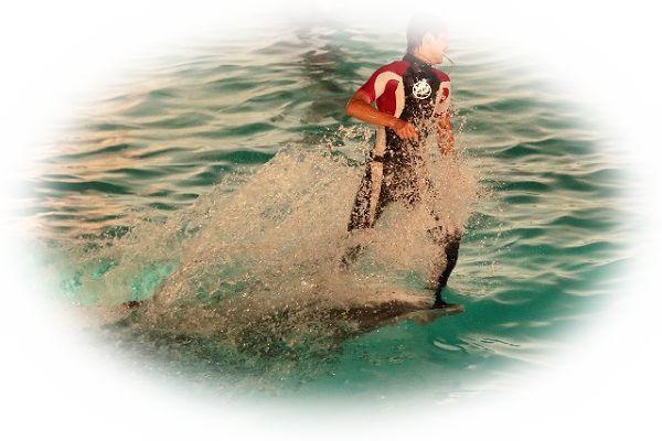 イルカに乗る夢