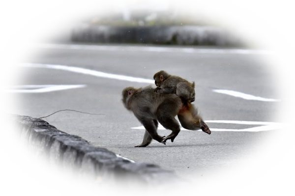 猿を追いかける夢(猿が逃げる夢)