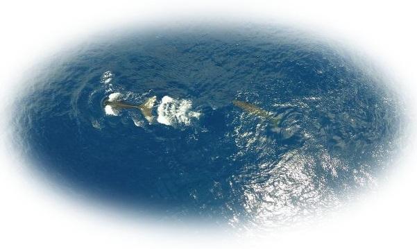 クジラの親子を見る夢