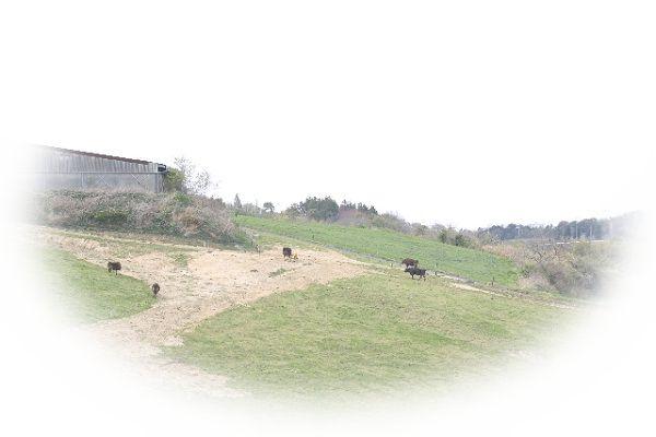 牛が山に登る夢(牛を牽いて山に登る夢)