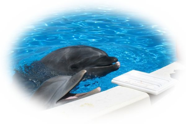 夢占いイルカの夢の意味とは?イルカと泳ぐ夢など27選!