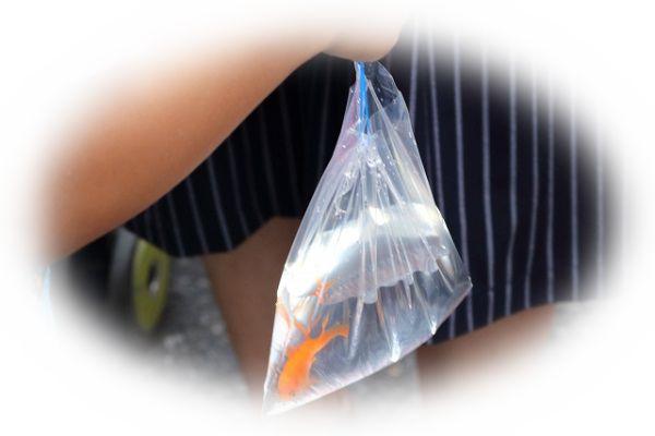 金魚を飼う夢