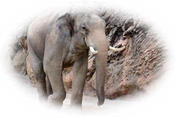 象牙の夢(立派で綺麗な象牙の夢、象牙が割れている夢)