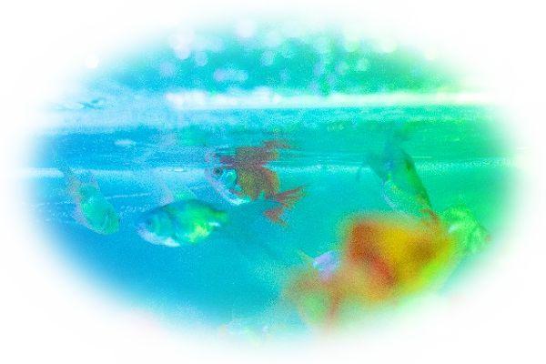 金魚を助ける夢