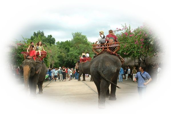 象の背中に乗る夢(象を手なづける夢、象と遊ぶ夢、象を飼う夢、象をかわいがる夢)