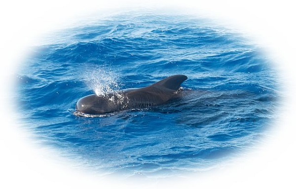 クジラが潮を吹いている様子を見る夢