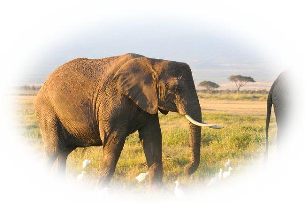 夢占い象(ゾウ)の夢27選!象の夢は大きな力のあらわれ?