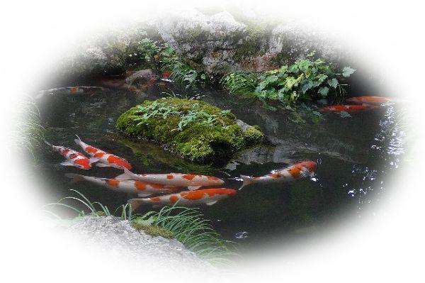 池の中で魚が遊ぶように泳ぐ夢(池の中の魚が死んでいる夢)