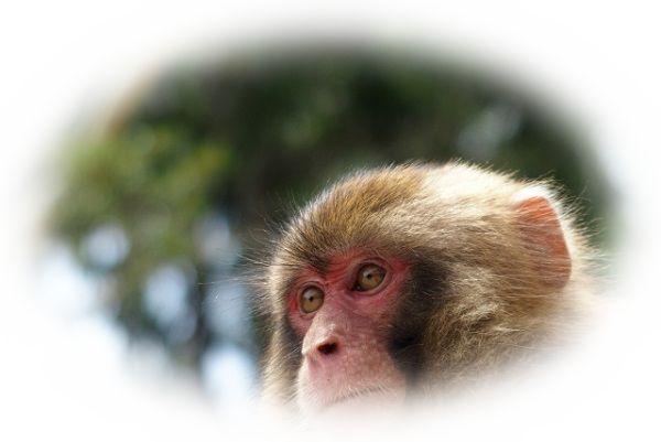 猿が木から落ちる様子を見る夢