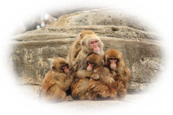 猿の赤ちゃんや子供を見る夢