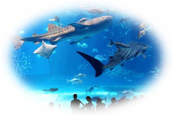 水槽の中にいるサメを見る夢(水族館でサメを見る夢)