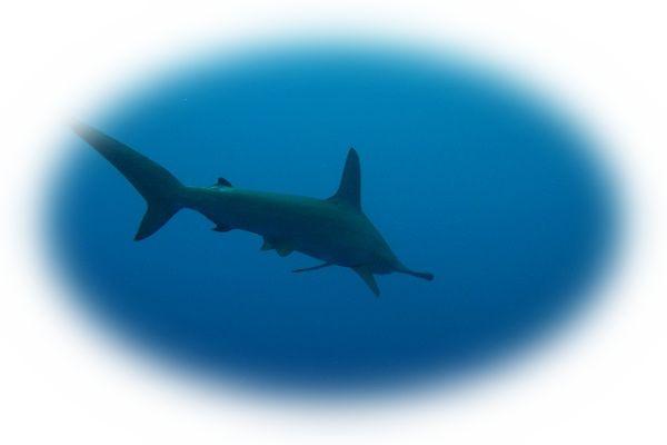 深海などの暗い海をサメが泳いでいる様子を見る夢