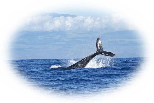 夢占い鯨(くじら)の夢の意味27選!クジラは脅威の表れ?