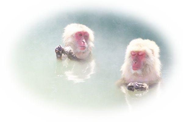 白い猿を見る夢(金色の猿を見る夢)