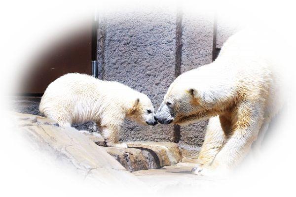 熊の親子を見る夢