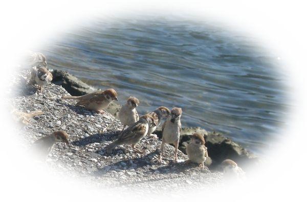 雀が集まる様子を見る夢(雀の群れを見る夢、雀の集団を見る夢)