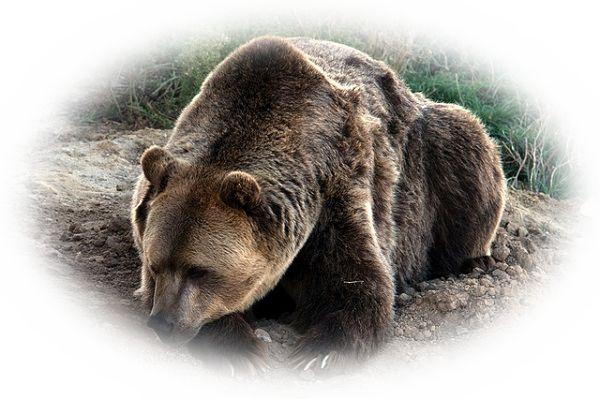 巨大な熊を見る夢