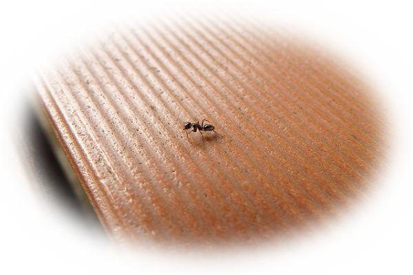 多数の蟻が家の中を這う夢(家の中に蟻を見つける夢)