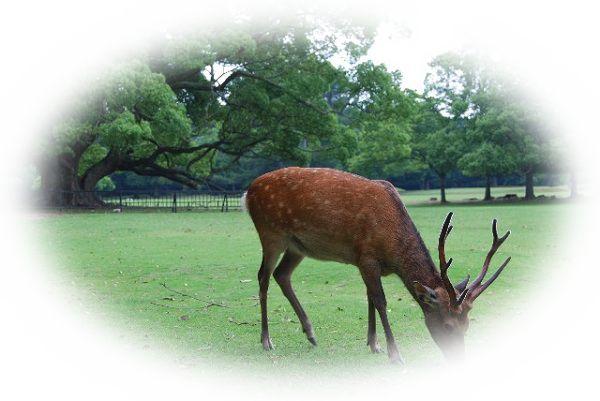 角の生えている鹿を見る夢