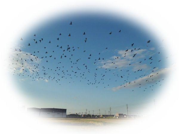 たくさんの鳩が飛んでいる夢(鳩の群れを見る夢)