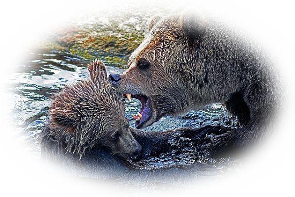 熊が暴れる様子を見る夢(凶暴な熊を見る夢)