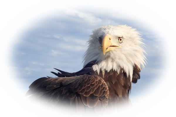 鷲に睨まれている夢(鷲の目が印象に残っている夢)
