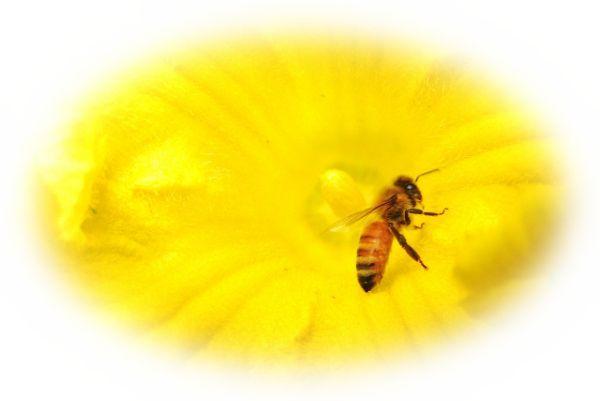蜂が蜜を集める夢