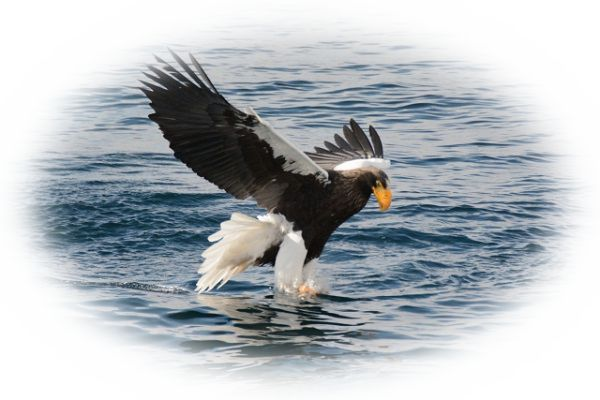 鷲に襲われる夢
