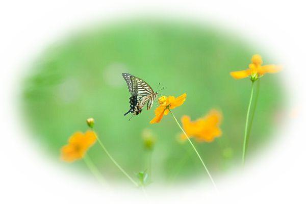 蝶々が花にとまる夢