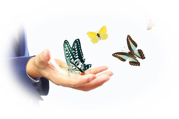 蝶々がまとわりつく夢(蝶々が自分の周りを飛ぶ夢)