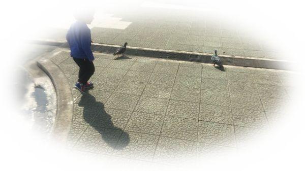 鳩を捕まえる夢