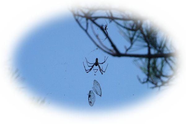 蜘蛛が頭上から落ちてくる夢(蜘蛛が降ってくる夢)