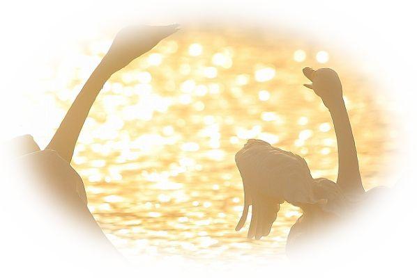 白鳥が求愛ダンスを踊っている夢