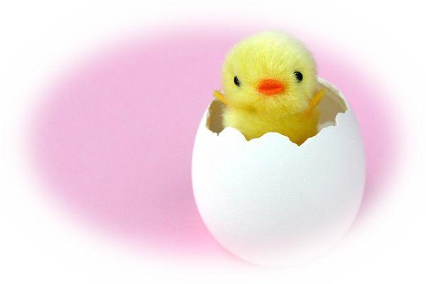 ひよこが卵の殻を破って生まれる夢(ひよこが孵化する夢)