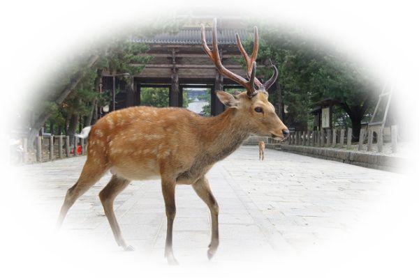 夢占い鹿(しか)の夢の意味26選!鹿の角がポイント!?