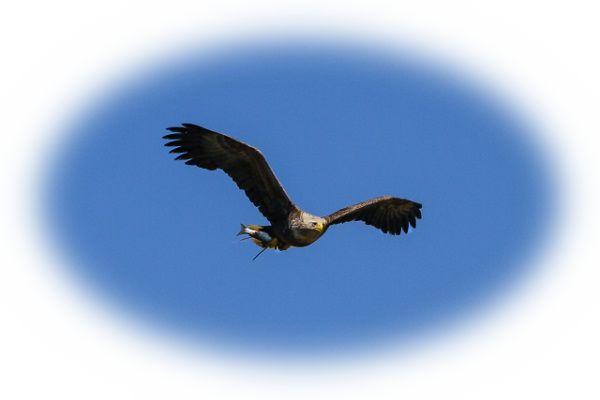 鷲が飛ぶ夢(鷲を見る夢)