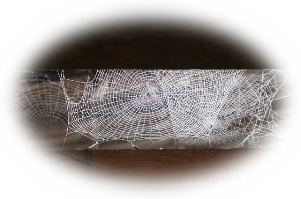 家や部屋の中に蜘蛛の巣が張られている夢