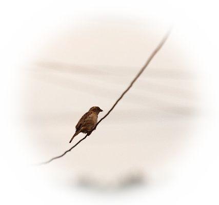 木の枝や電線などにとまっている雀を見る夢