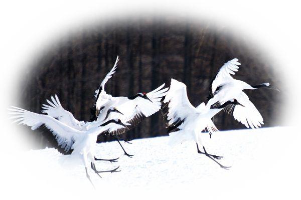飛び立つ鶴を見る夢