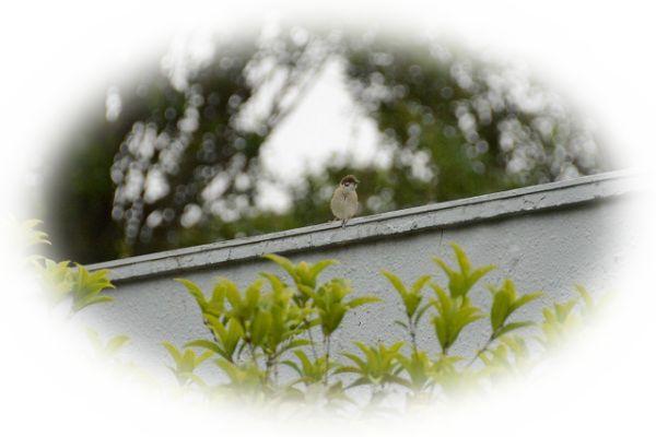 雀が家の中に入ってくる夢